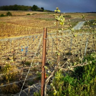 Champagne streek -Via Campaniensis
